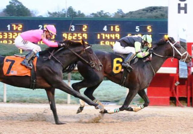 RUTA AL KENTUCKY DERBY (G1): Super Steed fue gran sorpresa en el Southwest S. (G3)