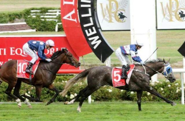 NUEVA ZELANDA: La tordilla SENTIMENTAL MISS fue la mejor en las New Zealand Oaks (G1)