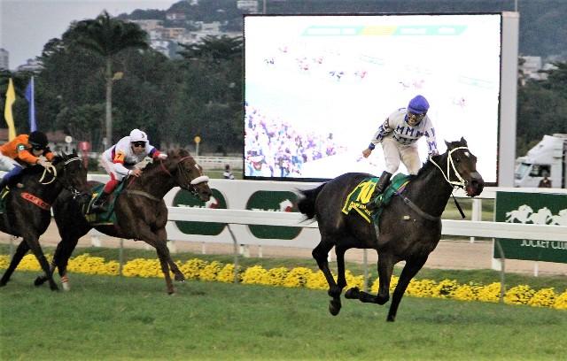 BRASIL: El potro GEORGE WASHINGTON se encumbró en el Grande Premio Brasil (G1) y obtuvo cupo para la Breeders' Cup Turf (G1)