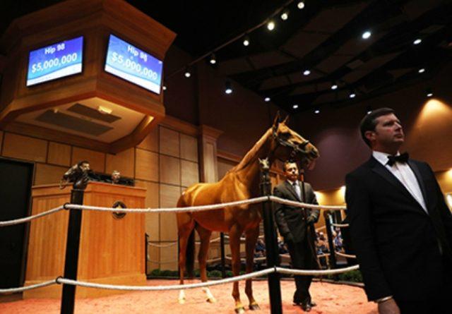 EUA: BLUE PRIZE se vendió por US$5.000.000 en la venta de Fasig-Tipton