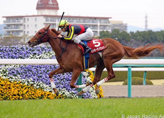 KYOTO (Japón): LUCKY LILAC volvió a primer plano en The Elizabeth II Cup (G1)