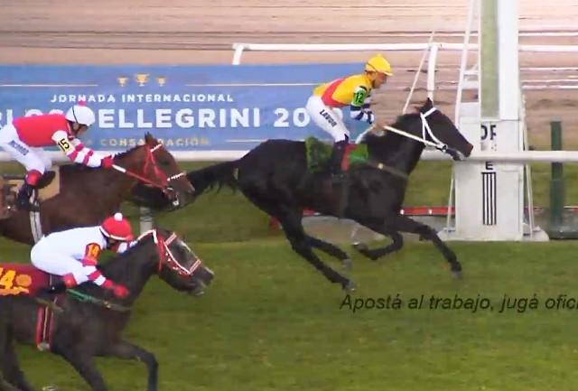 HIPÓDROMO DE SAN ISIDRO (Argentina): El brasileño NAO DA MAIS se hizo inalcanzable en el Gran Premio Internacional Carlos Pellegrini (G1)