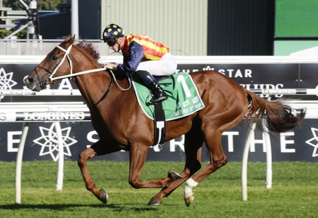 ROYAL RANDWICK (Australia): NATURE STRIP hizo gala de su Clase galopando en el T. J. Smith S. (G1)