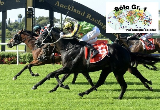 ELLERSLIE (Nueva Zelanda): ¡En triple final!  El australiano ROCKET SPADE se encumbró en el NEW ZEALAND DERBY (G1)