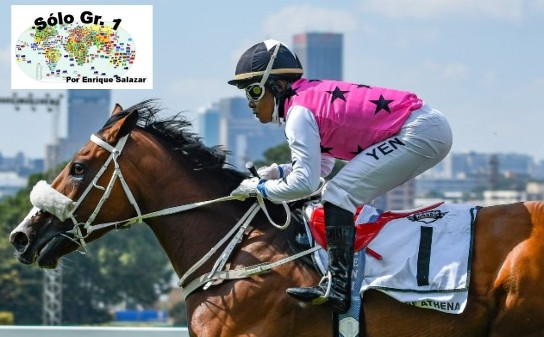 TURFFONTEIN (Suráfrica): WAR OF ATHENA se sobró en el SOUTH AFRICAN FILLIES CLASSIC y parece con la Triple Corona a disposición